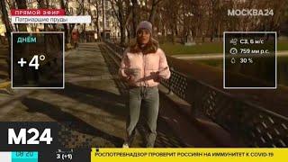 """""""Утро"""": на 7 апреля в Москве прогнозируют очередное потепление - Москва 24"""