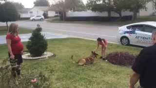 Family Dog Obedience Training
