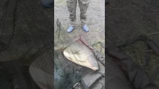 Majówka małego rekina i życiówka Danego 25 kg eldorado( ZAPOWIEDŹ)