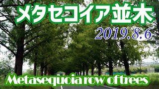 マキノ高原・メタセコイア並木(滋賀県)