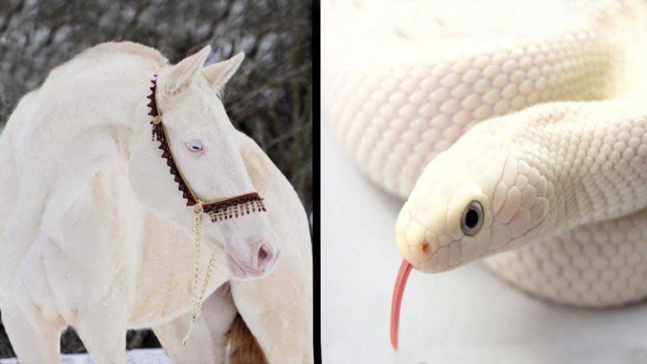 أجمل الحيوانات ذات السلالة البيضاء و الاكثر غرابة  في العالم !