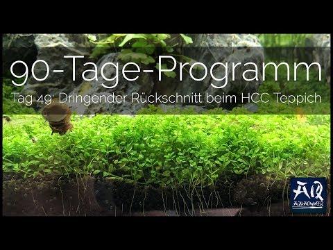 TAG 49: TROPICA 90-TAGE-PROGRAMM | Drastischer Rückschnitt des HCC Teppichs | AquaOwner