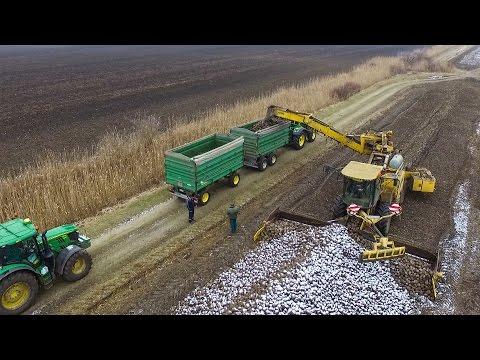 Ropa Euro Maus Loading Sugar Beet - MTZ 1025.2 + 14x John Deere Tractors (Cukorrépa szállítás)