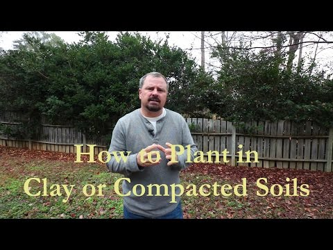 How To Plant In Clay Or Compacted Soils (Short Version)