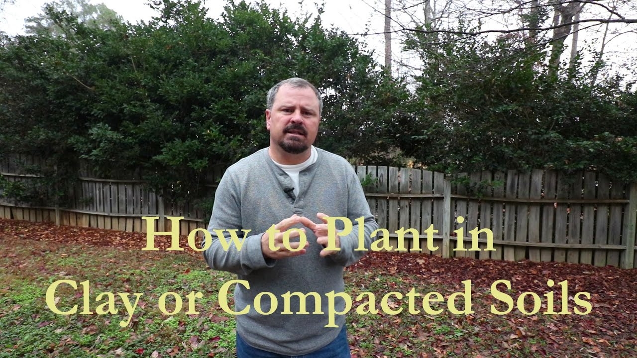 How To Plant In Clay Or Compacted Soils Short Version