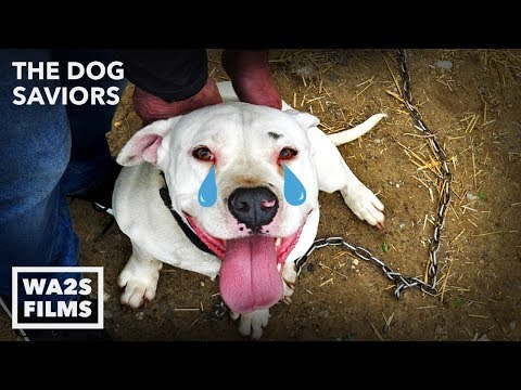 Chained Pit Bull Cries 4 Years Until Hope For Dogs Rescue Him!  Hope For Dogs | My DoDo