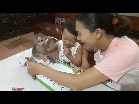 Baby Monkey Doo / Time To Play And Learn With His Brother