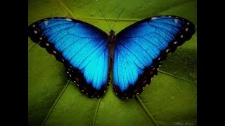 Домашний бабочкарий от FLY-FLY.RU
