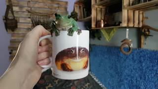 Когда твой чай ну крайне зелёный: - Ну, допустим, ква.