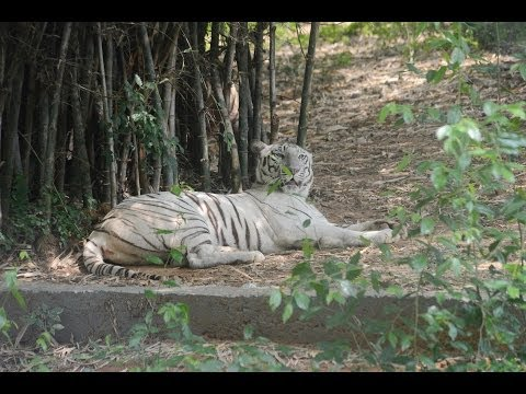 VANDALUR ZOO - A SMALL VACCATION @ VANDALUR ZOO (VANDALUR ZOO)