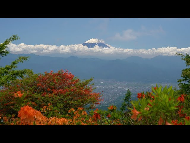 2019 甘利山の蓮華ツツジと富士(4K) Mt. Fuji & Beautiful Azalea Seen At Mt. Amari(UHD)