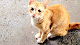Животные наши друзья =)