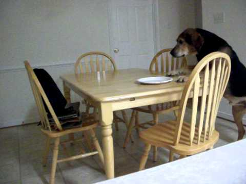 Dog Eats Cat Treats And Gets In Trouble