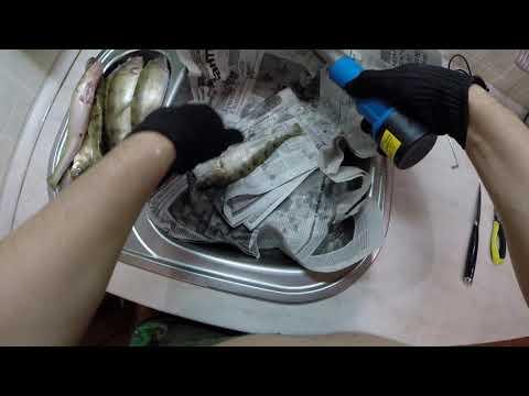 Смотреть видео Как почистить судака за 2 минуты на vidos.cc бесплатно