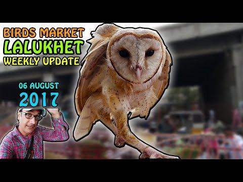 Sunday Birds Market Weekly Update   Lalukhet Karachi   Video is URDU/HINDI