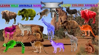Teach Wild Animals Names and Sounds for kids in English | Learning Colors With Animals For Children!