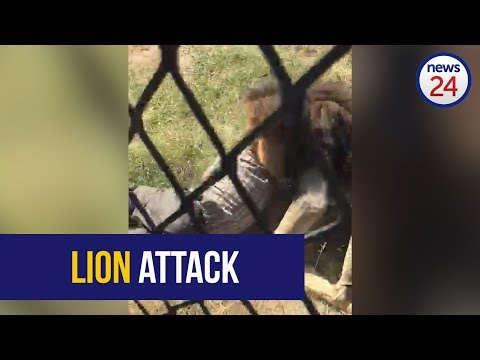 WATCH: Man attacked by lion