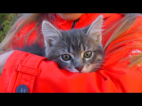 ВЛОГ Ярослава спасла маленького котенка на улице | Видео для детей