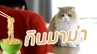 Theycallmemeaow | เพลง กินมาม่า
