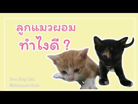 ลูกแมวผอม ทำไงดี???