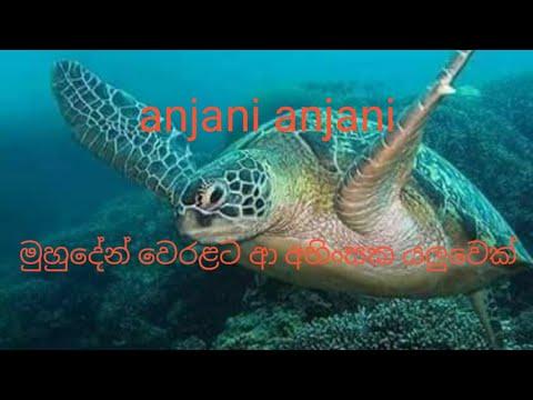 Download turtle turtle | turle turle