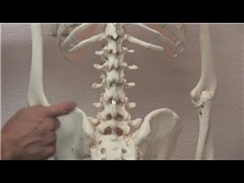 hqdefault - Back Pain Chiropractic Clinic Freeport, Ny