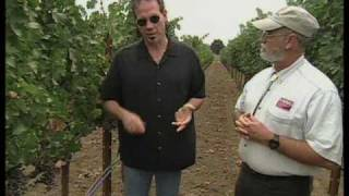 How To Grow A Vineyard