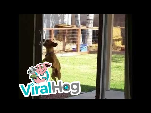 Determined Dog Opens Sliding Door