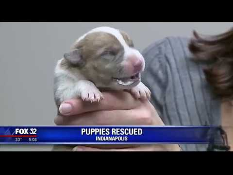 Officer rescues newborn puppies found in trash
