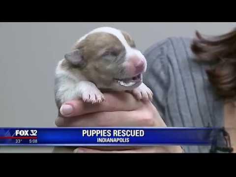 Officer rescues newborn puppies found in trash