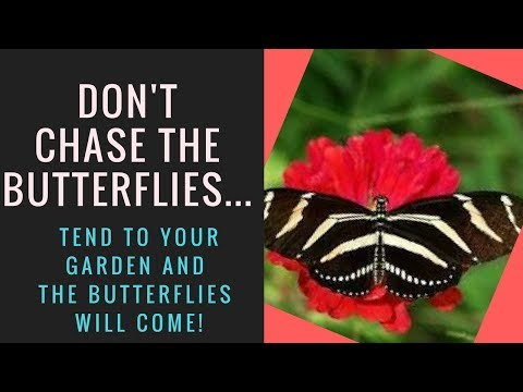 Don't Chase The Butterflies...Tend To Your Garden!