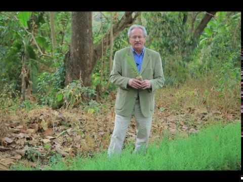 Tag des Baumes: Über 200 Millionen Bäume für Äthiopien / Stiftung Menschen für Menschen setzt am Berg Kundudu im Osten Äthiopiens gewaltiges Aufforstungsprojekt um
