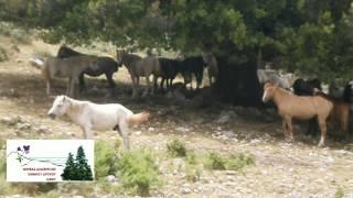Τα Άλογα του Αίνου επέστρεψαν για τους θερινους μήνες στην περιοχή του μοναστηριού της Ζ.Πηγής
