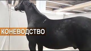 Прямой эфир. Золотая Осень. Выводка лошадей. Коневодство. Русские породы лошадей