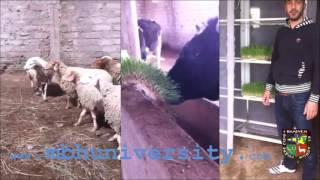 Comment faire du fourrage vert hydroponique