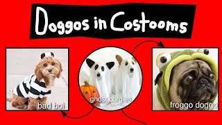 doggos-in-costooms