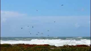 Seagulls flying on the wind