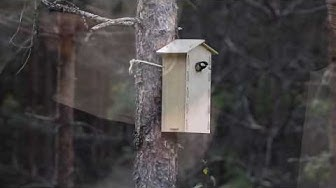 Kolo Design linnunpöntön kokoaminen