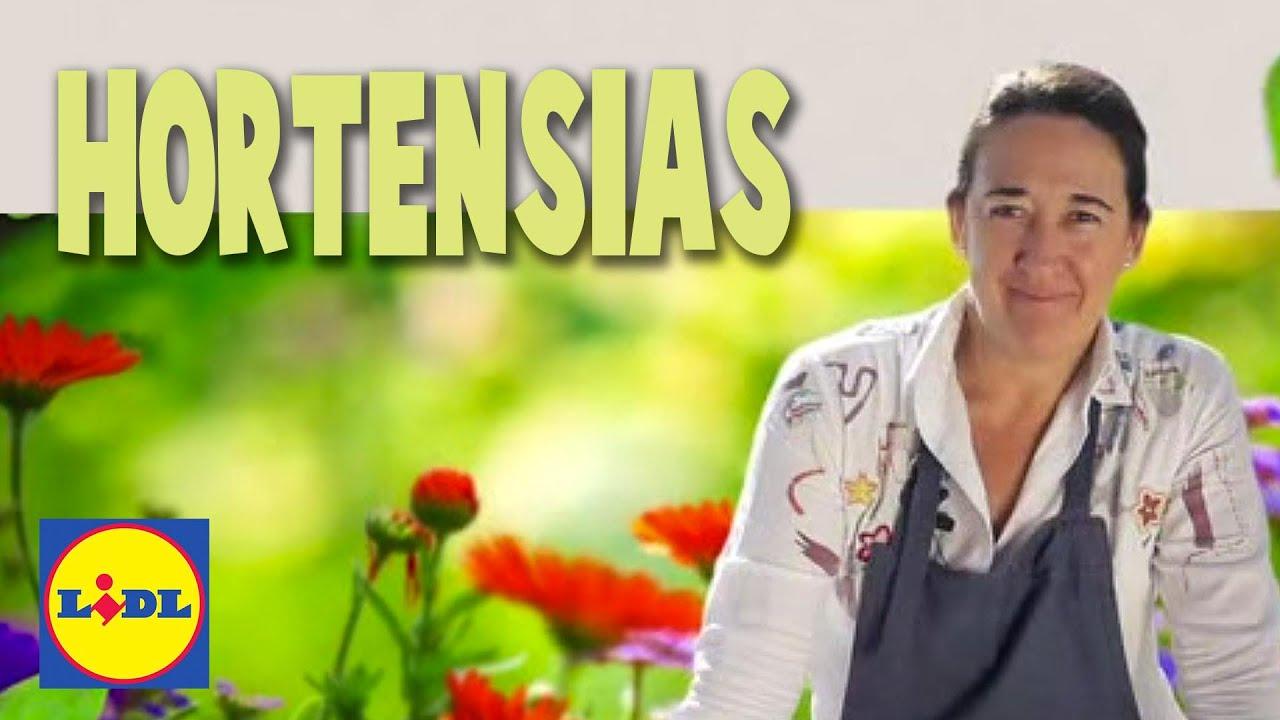 Plantacin y Cuidado De Hortensias Lidl Jardn YouTube