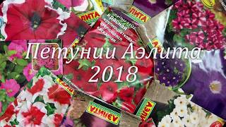 Петунии Аэлита 2018 г