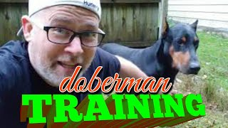 Doberman Pinscher Vlog - TRAINING & TRUST - How to teach your dog
