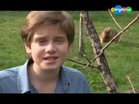 Степные Сурки - Байбаки. В мире животных