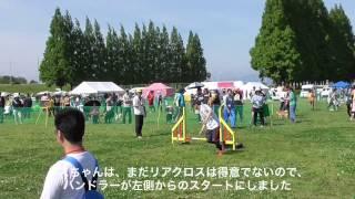 2015/5/17(日)に吉見総合運動公園で開催された「JKC 埼玉北ドゥアジリテ...