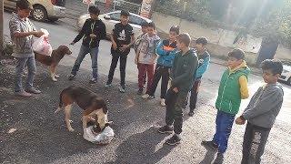 Sokak Köpeklerini Besleyip Dolaştıran Çocuklar
