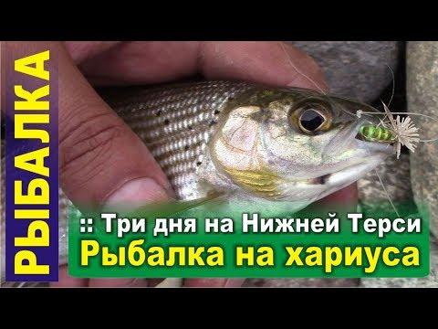 Рыбалка на хариуса с ночевкой на Нижней Терси. Заповедная тайга, хариус, таймень, уха на костре.