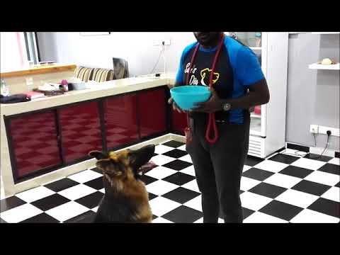 1 minute Dog Training Tips - Feeding the right way