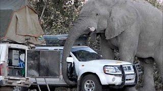 Дикий слон разгромил полгорода в Индии