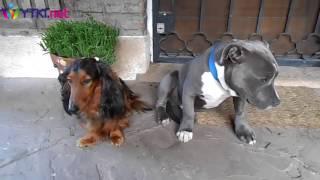 Допрос собак по поводу обгрызанного тапка