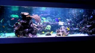 A perfect german reef aquarium vol. 3