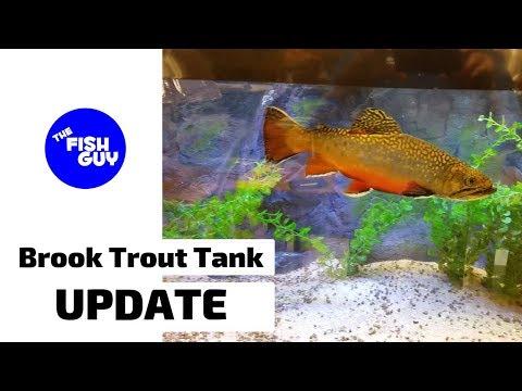 Brook Trout Tank UPDATE!